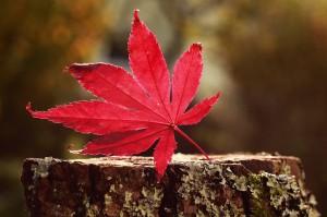 autumn-525578_1280