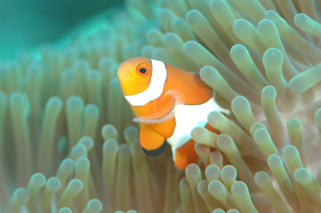 underwaterphotography